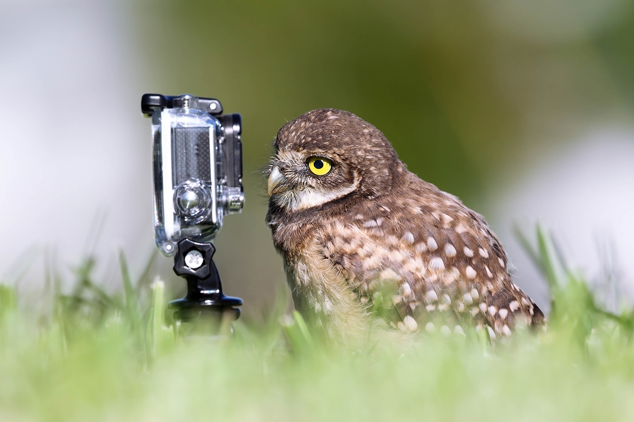 Comedy Wildlife Photography Awards 2015_06