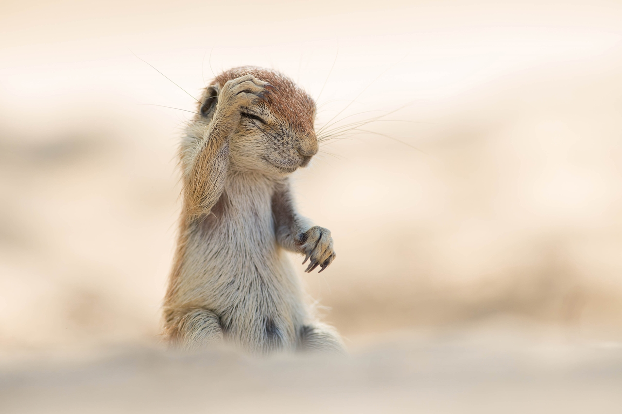 Comedy Wildlife Photography Awards 2015_08