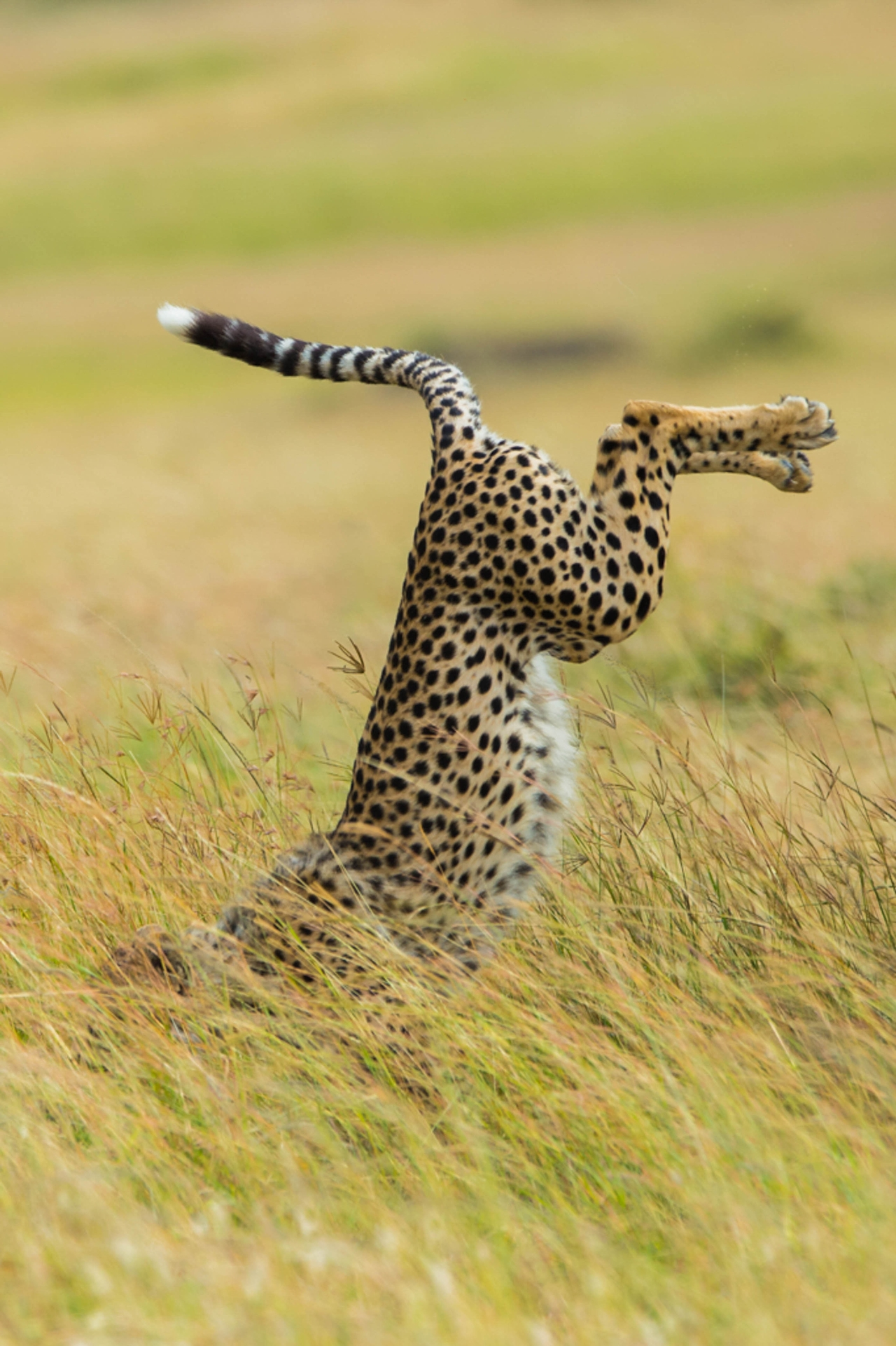 Comedy Wildlife Photography Awards 2015_11