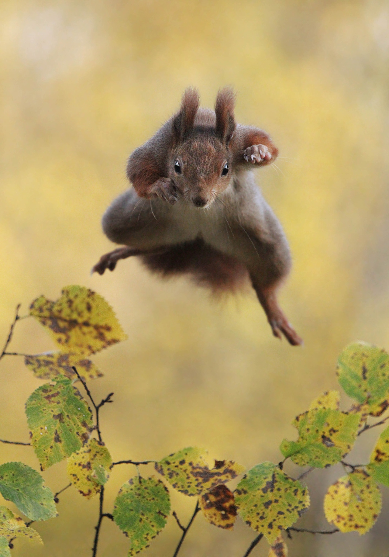 Comedy Wildlife Photography Awards 2015_15