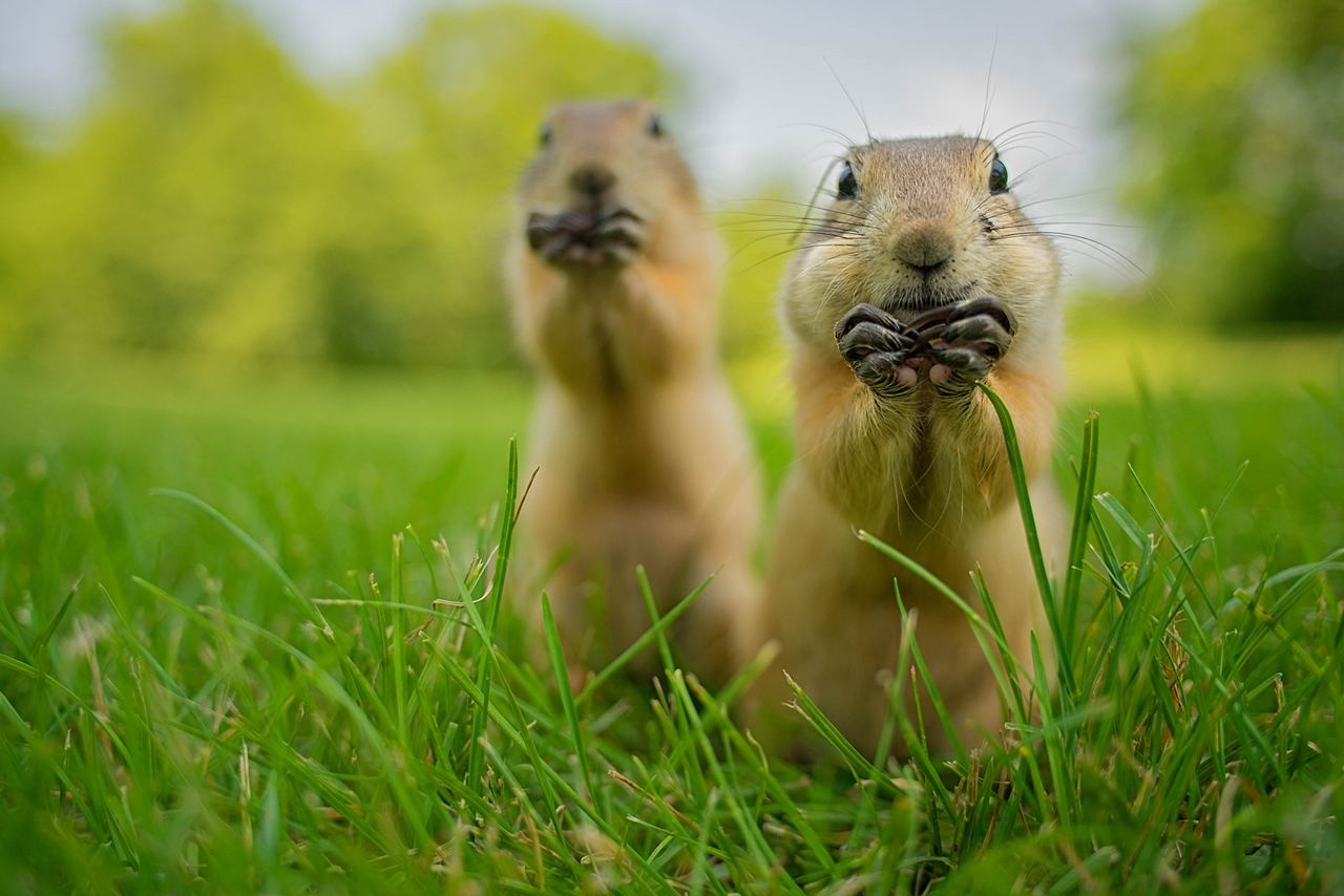 Comedy Wildlife Photography Awards 2015_16