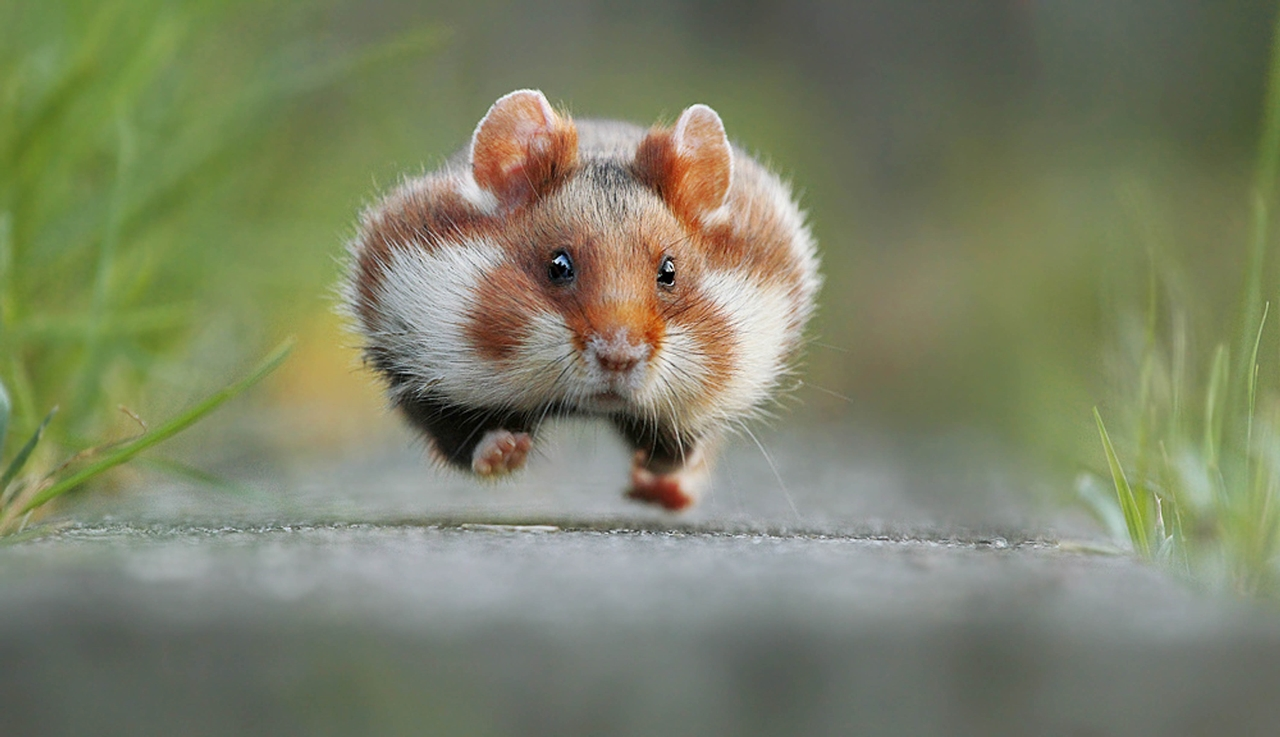 Comedy Wildlife Photography Awards 2015_22