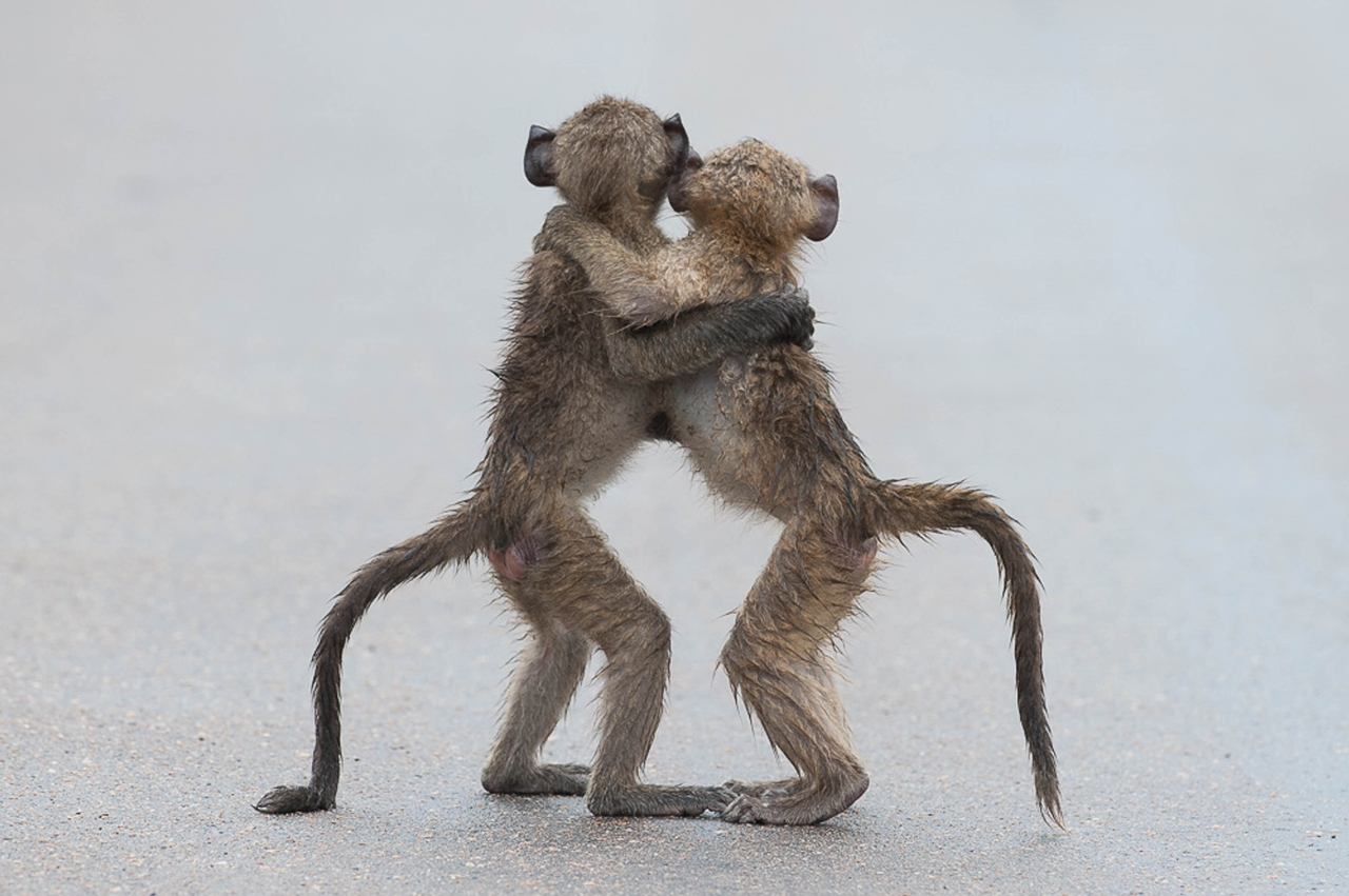 Comedy Wildlife Photography Awards 2015_27