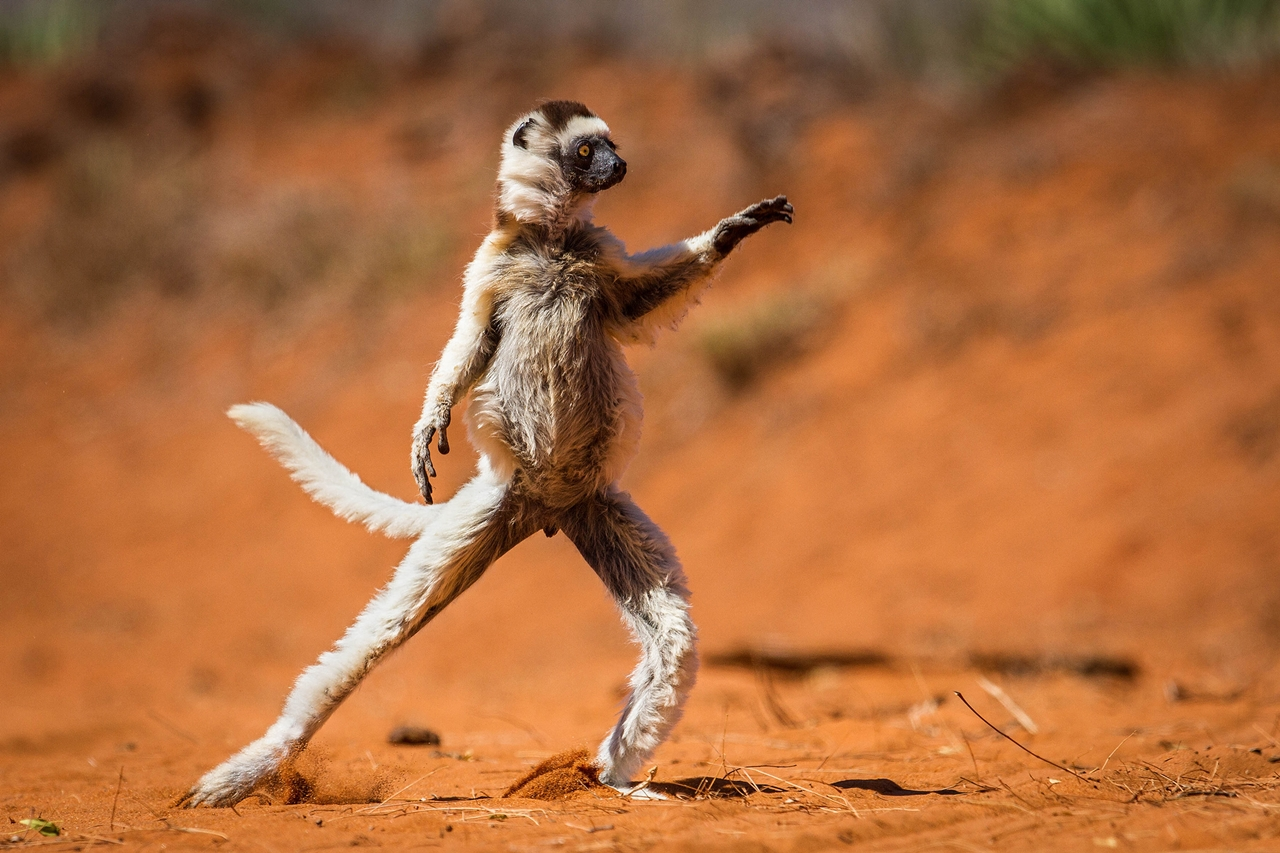 Comedy Wildlife Photography Awards 2015_28