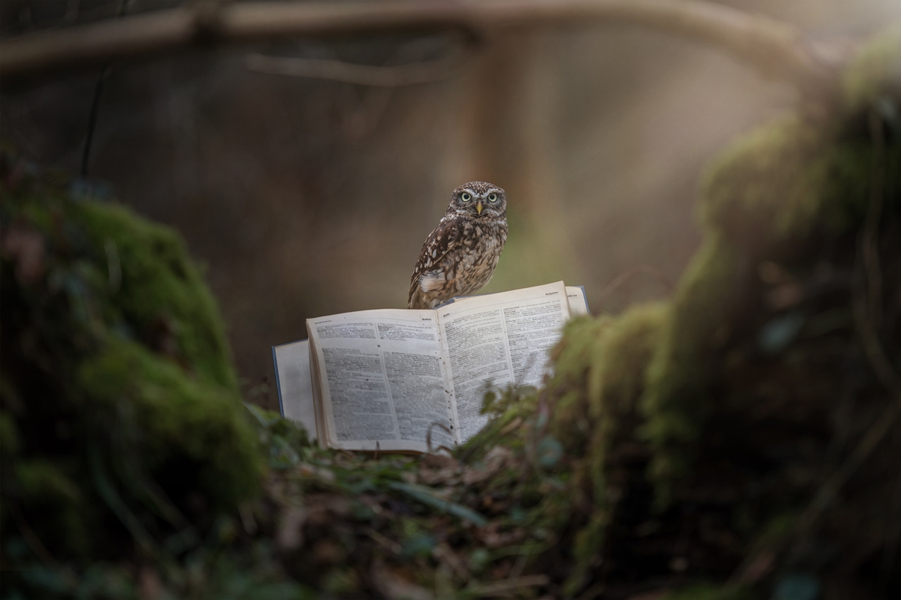 Cute Tiny Owl 05