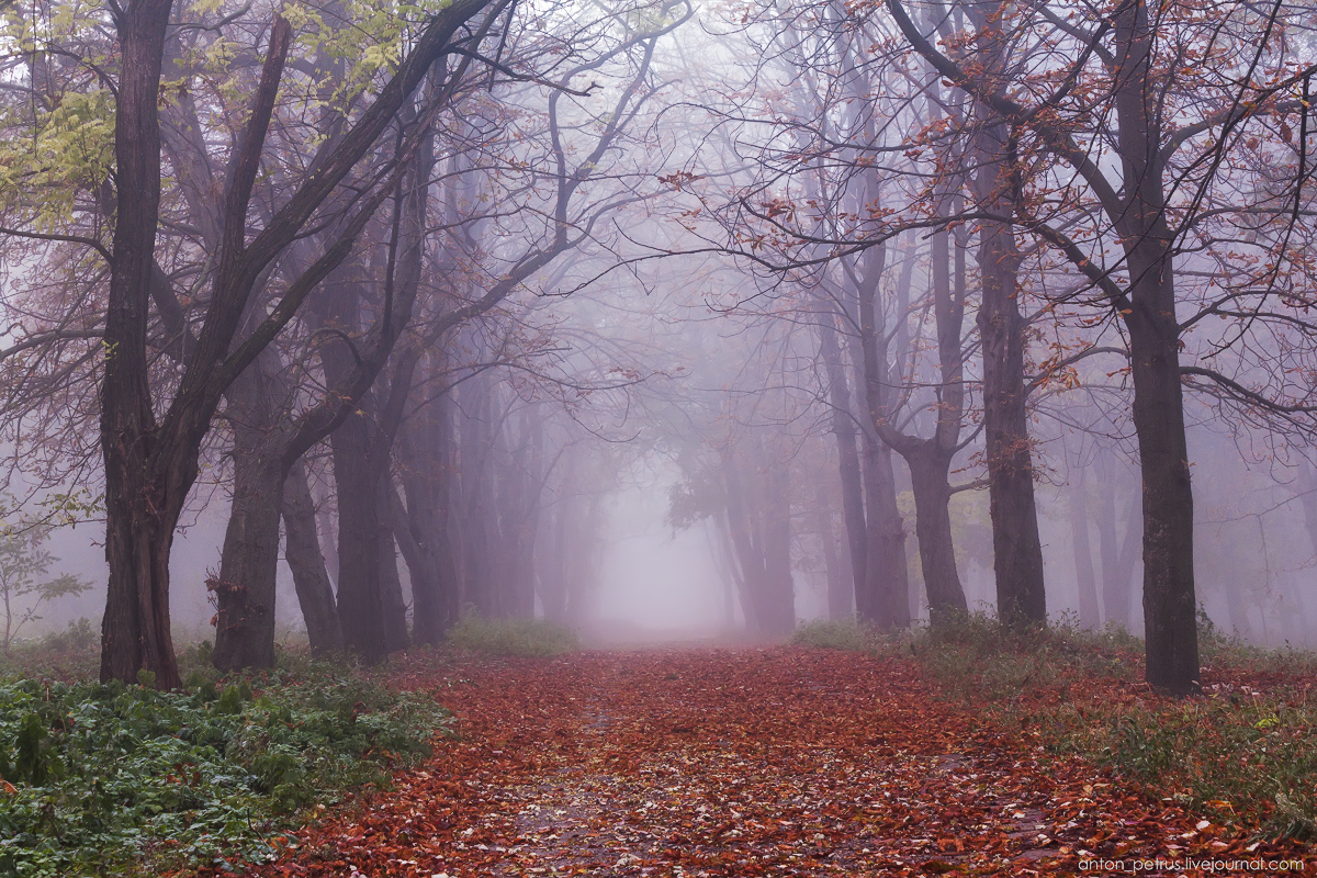 Foggy autumn 01