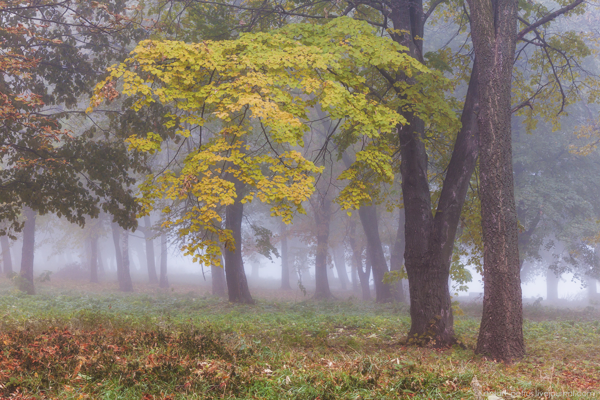 Foggy autumn 02