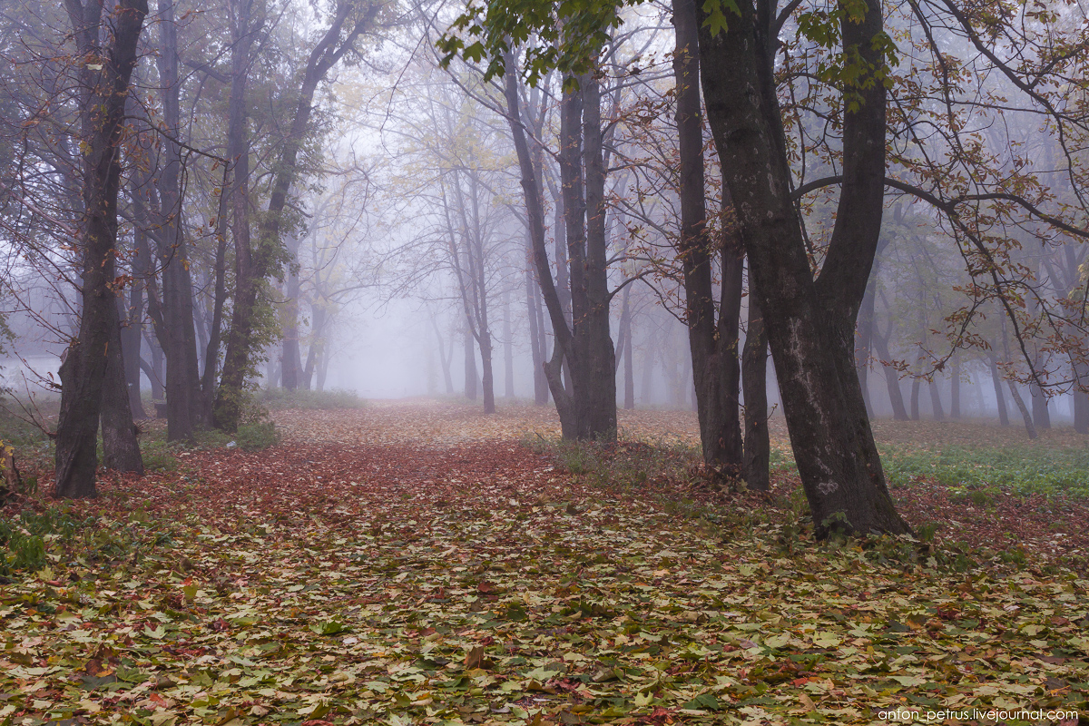 Foggy autumn 03