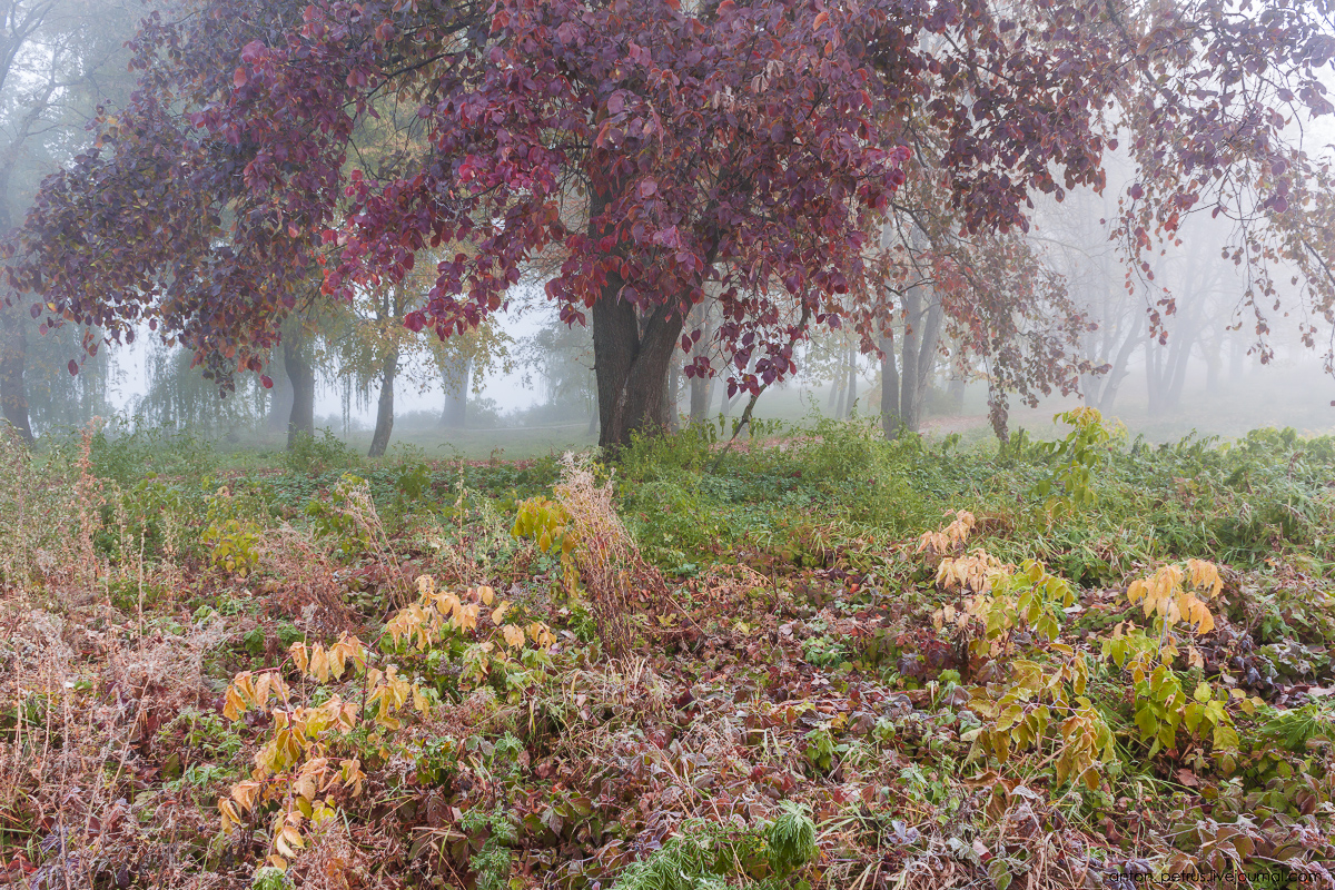 Foggy autumn 05