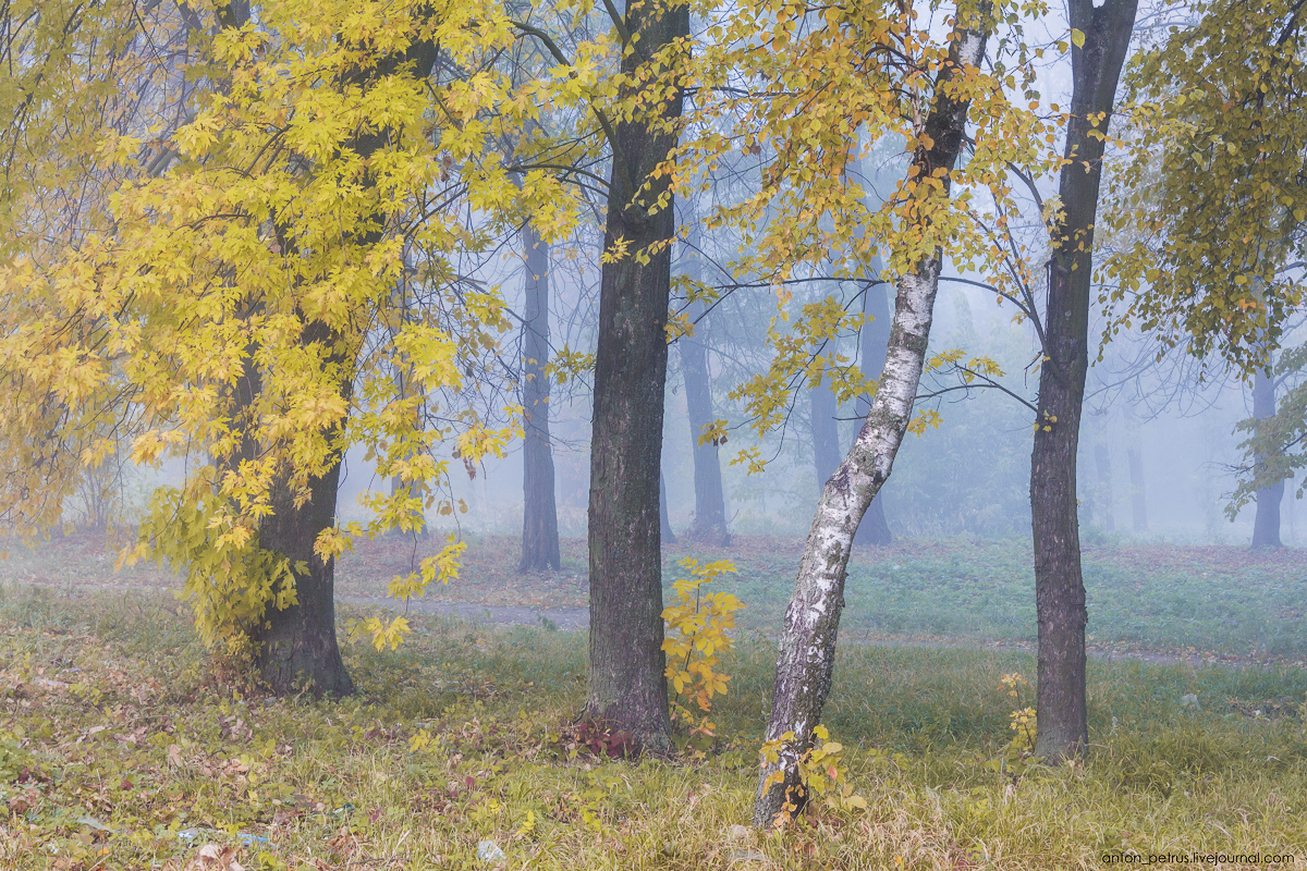 Foggy autumn 06