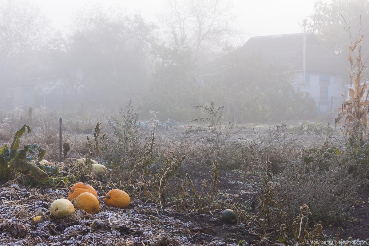 Foggy autumn 08