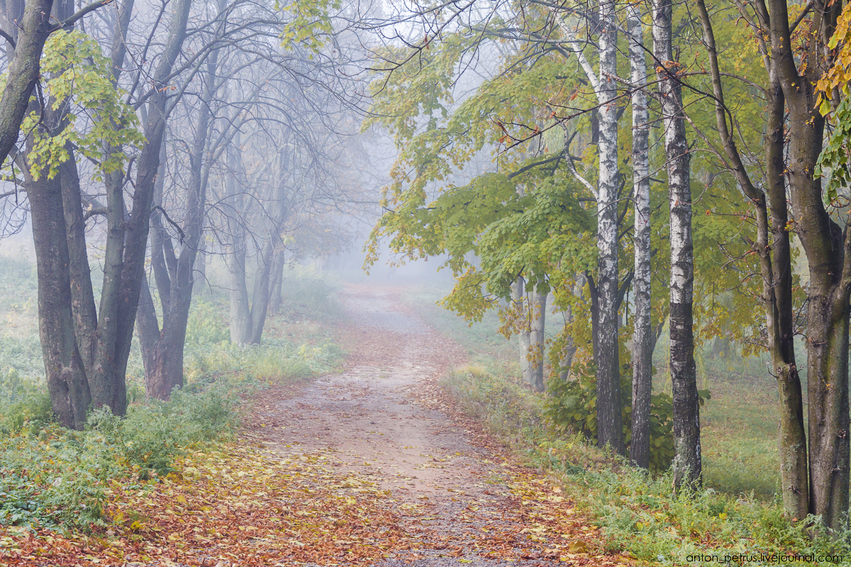 Foggy autumn 10