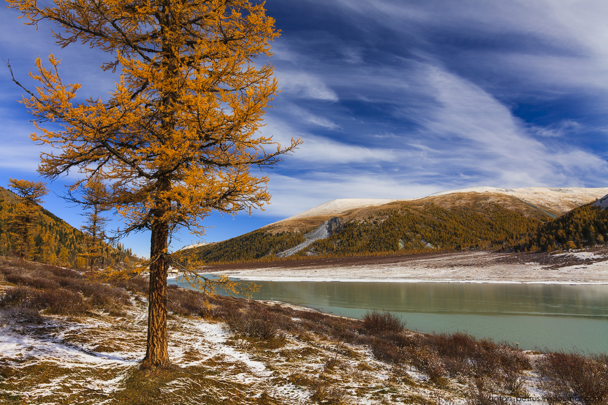 Golden autumn in Altai. Lake Akkem 09
