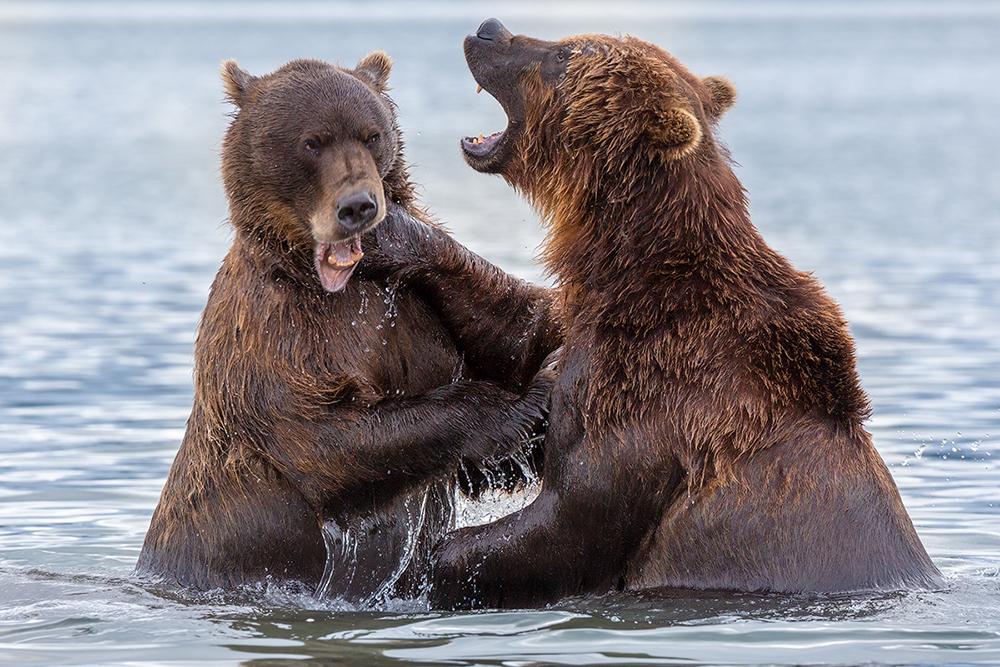 Первозданная Камчатка: Земля медведей
