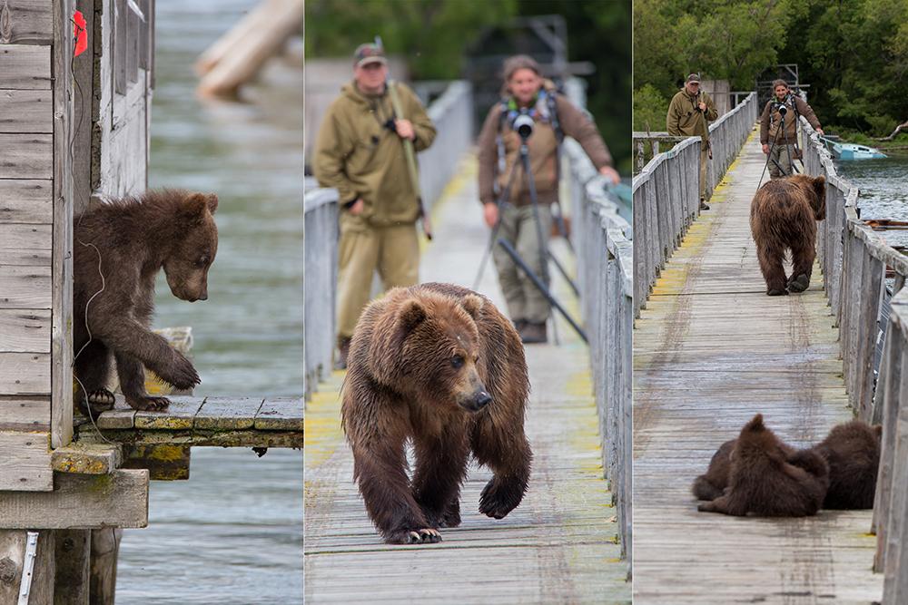 Kamchatka the Land of bears 11
