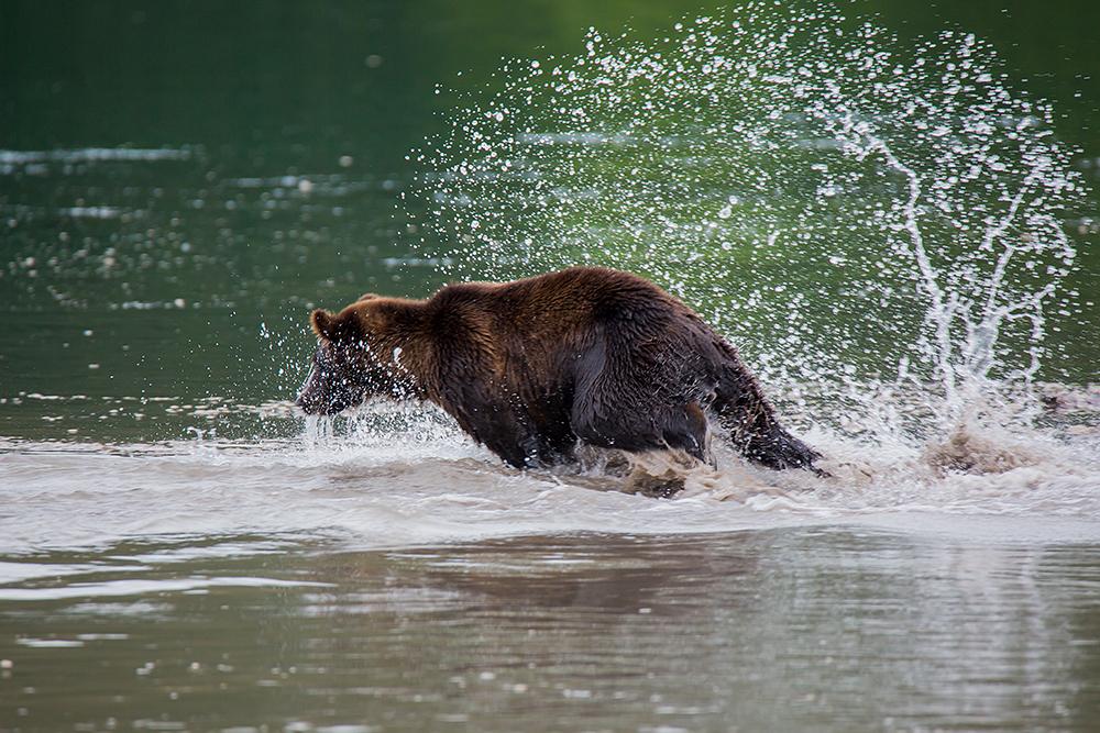 Kamchatka the Land of bears 13