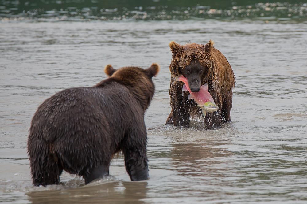 Kamchatka the Land of bears 14
