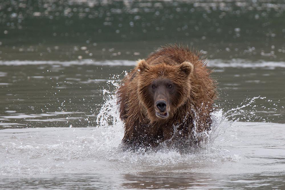 Kamchatka the Land of bears 15