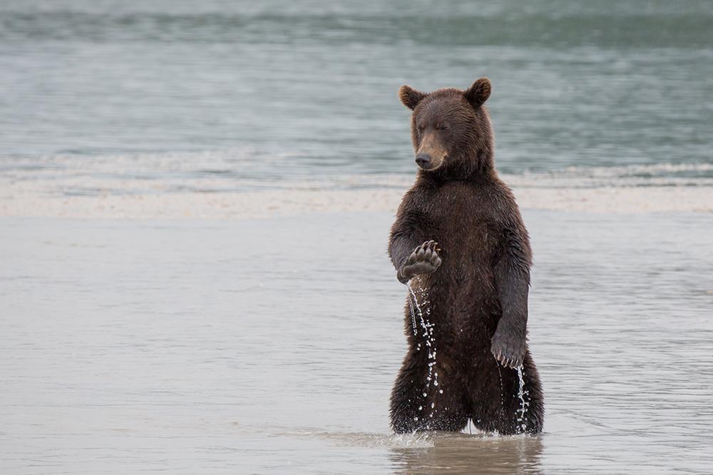 Kamchatka the Land of bears 16