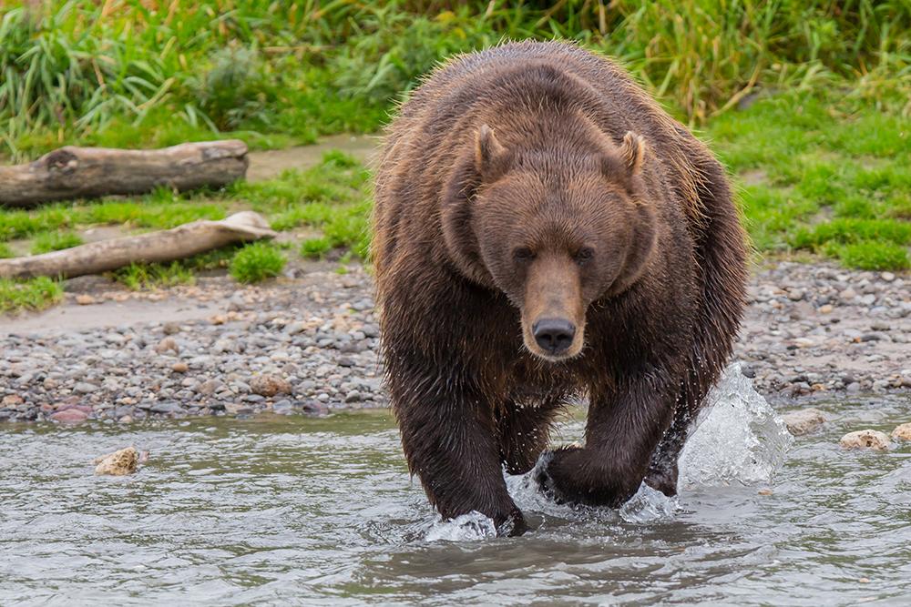 Kamchatka the Land of bears 20