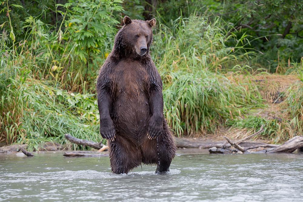 Kamchatka the Land of bears 21