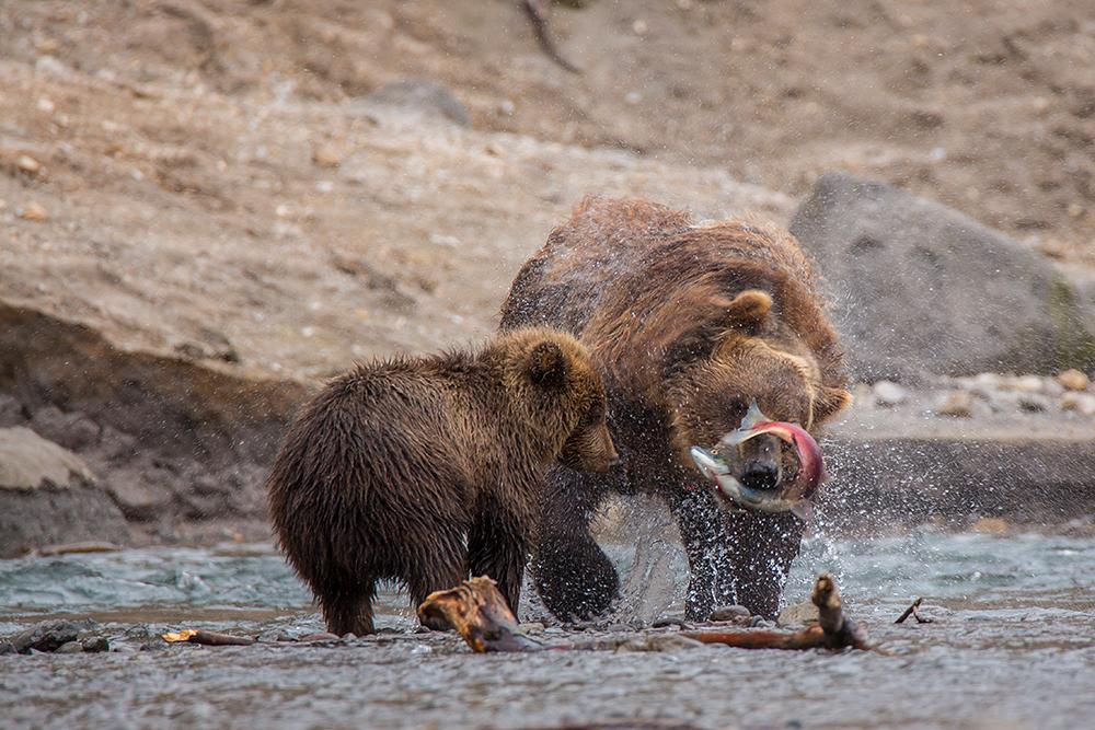 Kamchatka the Land of bears 23