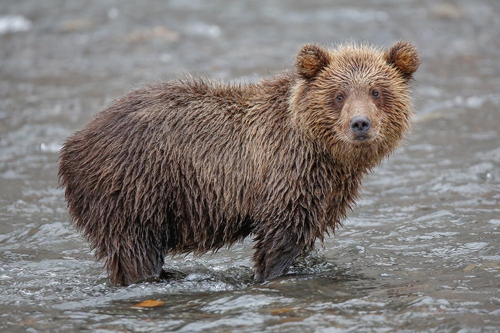 Kamchatka the Land of bears 24