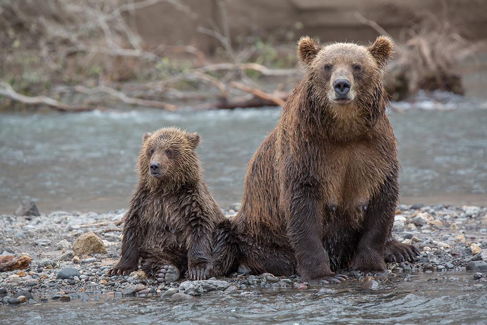 Kamchatka the Land of bears 26