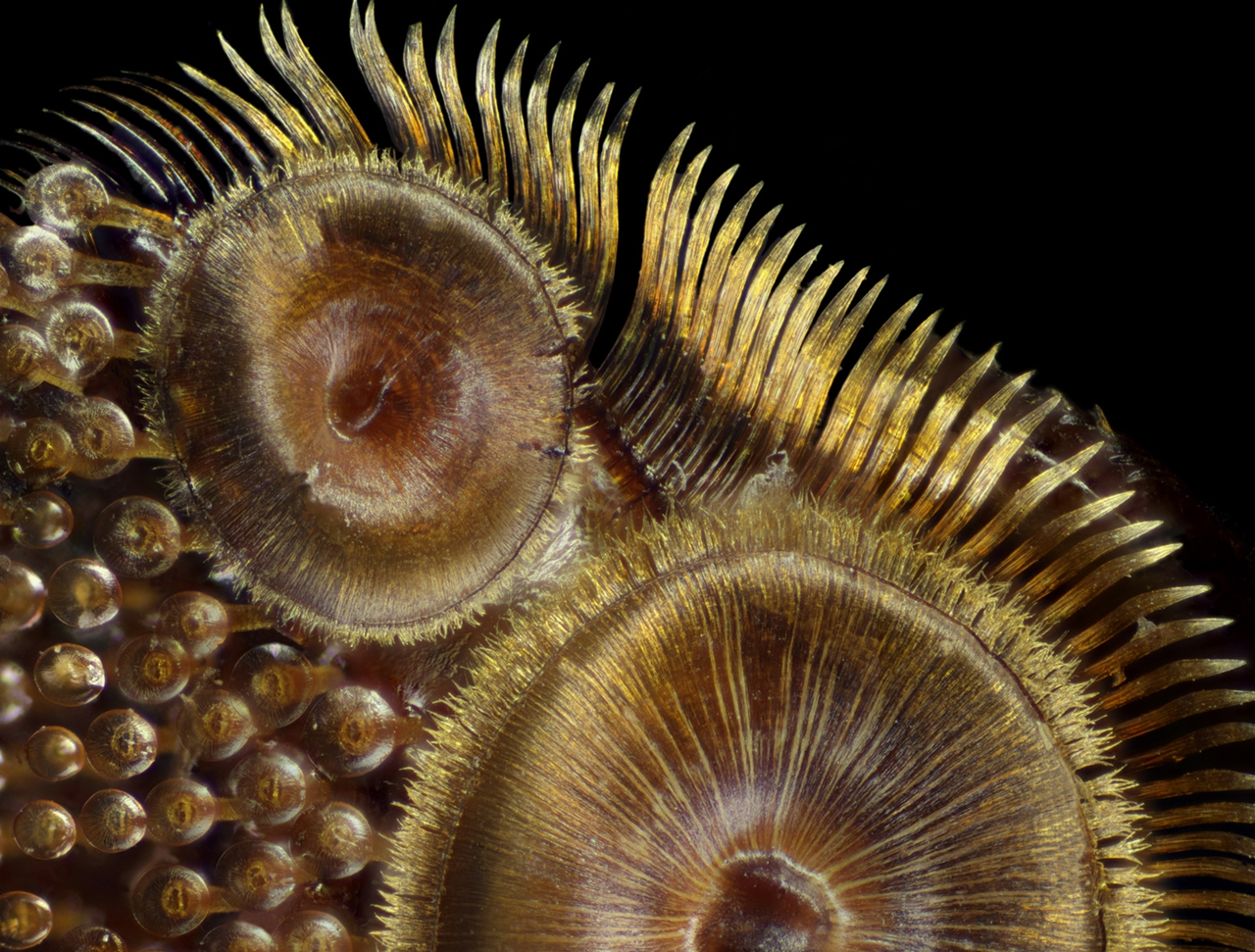 Photographing the Microscopic Winners of Nikon Small World 2015_20