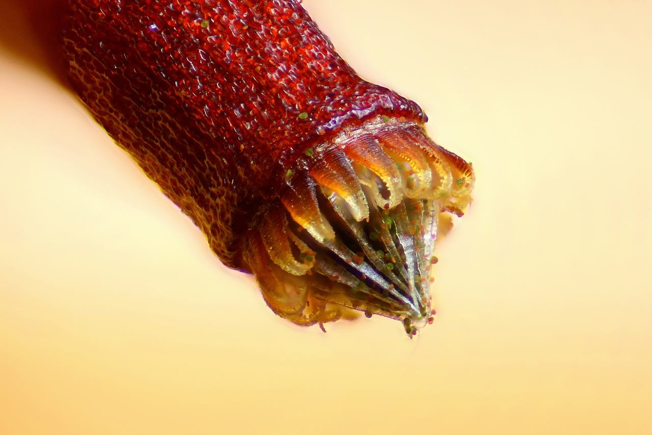 Photographing the Microscopic Winners of Nikon Small World 2015_26