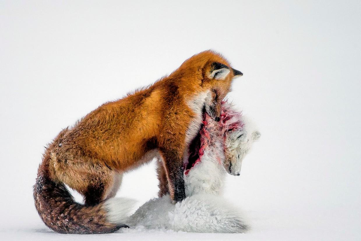 Pobediteli-fotokonkursa-Wild-life-Photographer-of-the-Year-2015_1