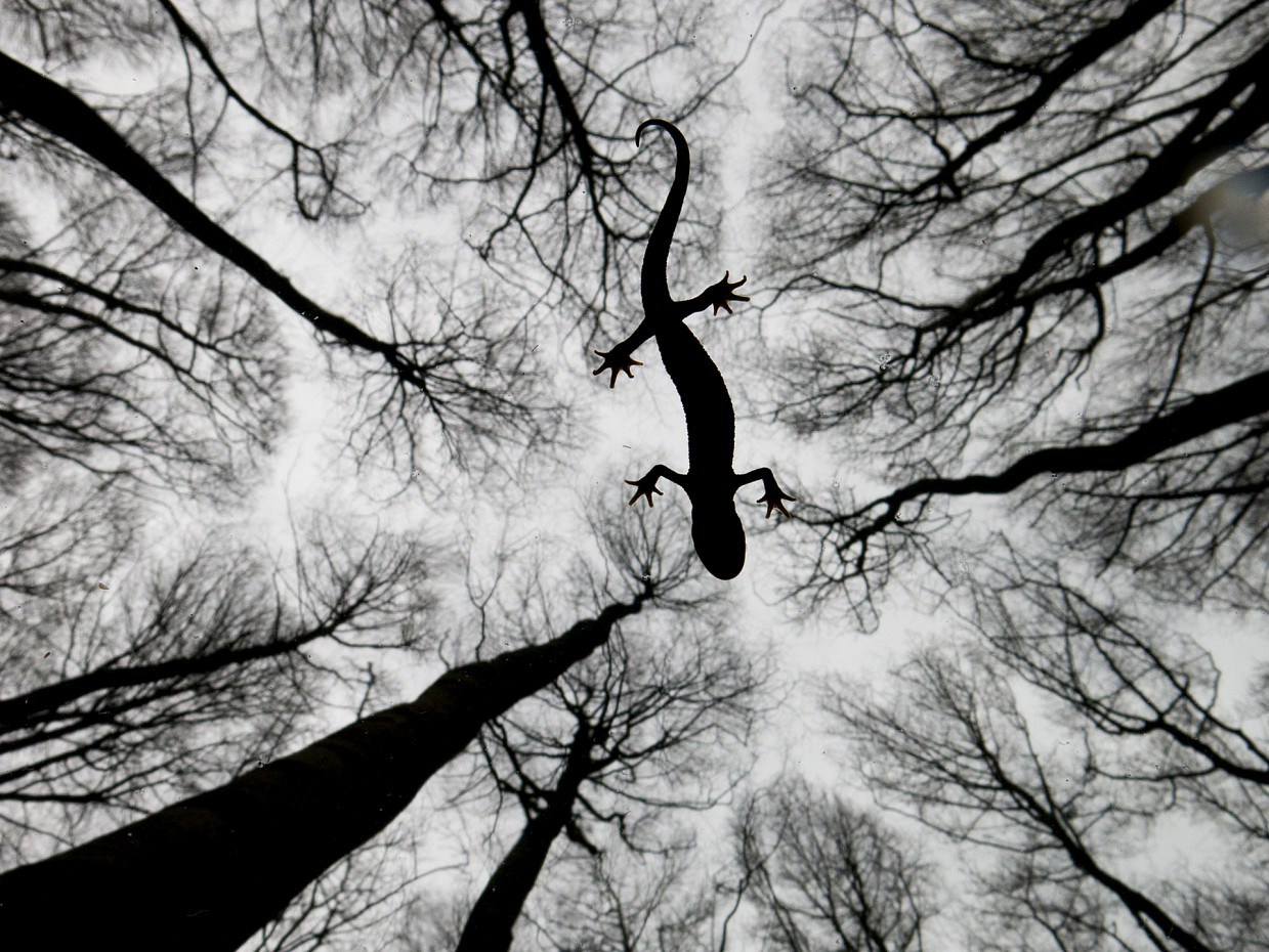 Pobediteli-fotokonkursa-Wild-life-Photographer-of-the-Year-2015_5