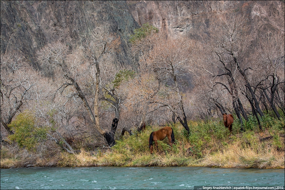 The Grand Canyon in Kazakhstan 27
