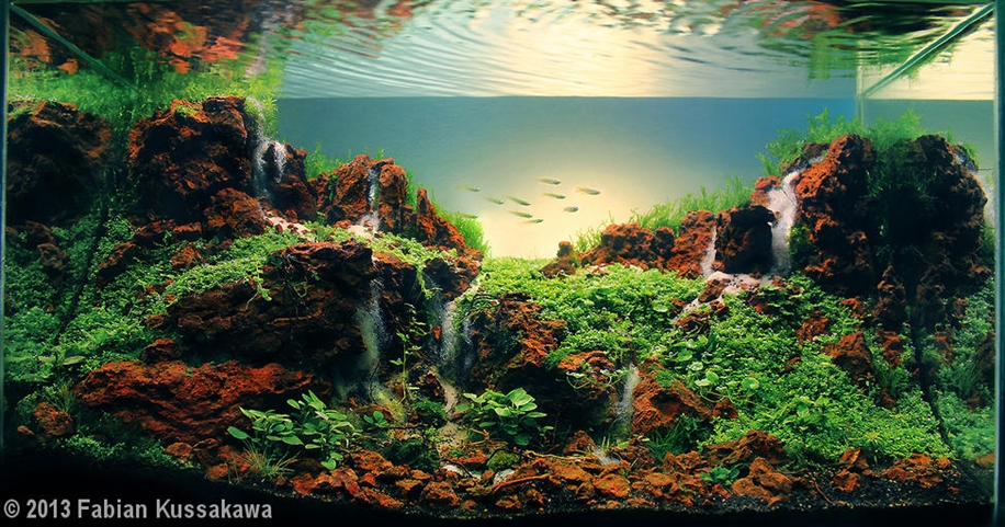 The beauty of aquarium landscapes 04