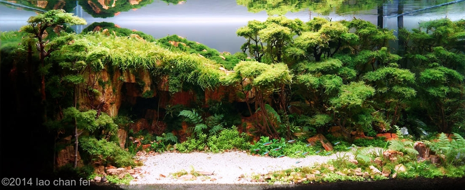 The beauty of aquarium landscapes 05