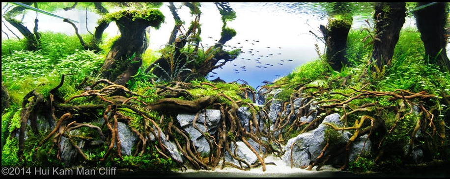 The beauty of aquarium landscapes 07