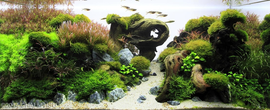 The beauty of aquarium landscapes 09