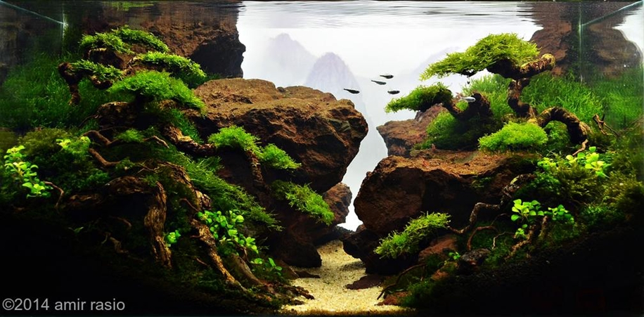 The beauty of aquarium landscapes 12