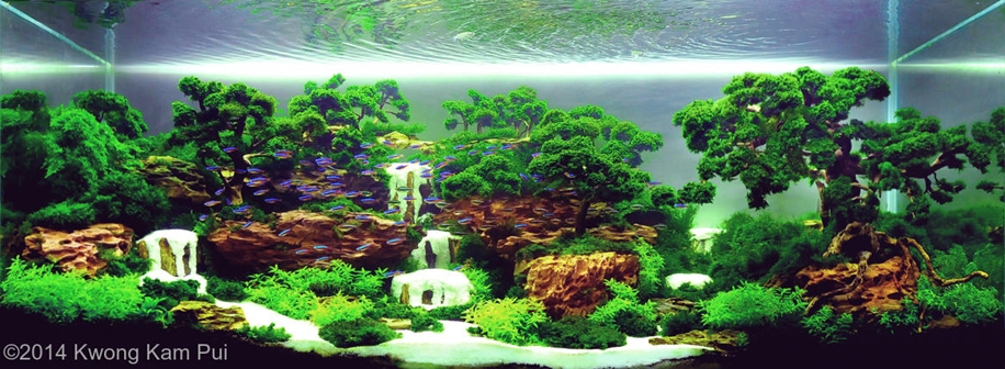 The beauty of aquarium landscapes 15