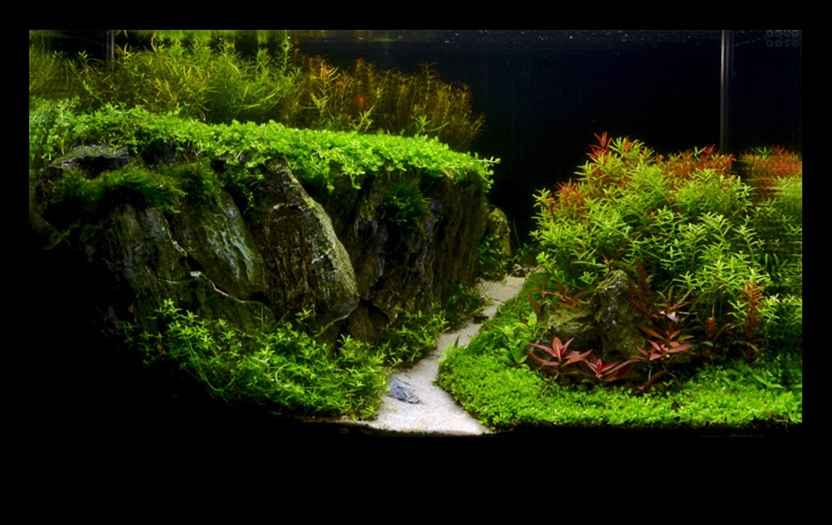 The beauty of aquarium landscapes 17