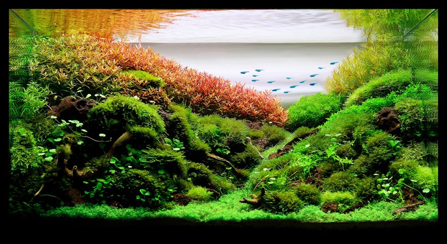 The beauty of aquarium landscapes 18