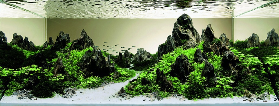 The beauty of aquarium landscapes 19
