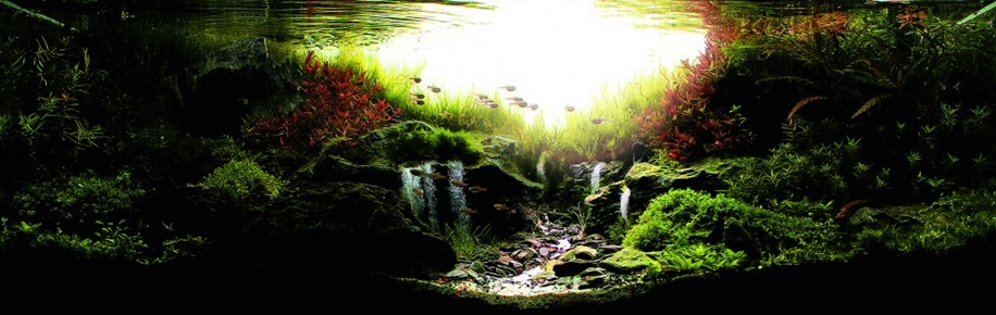 The beauty of aquarium landscapes 20