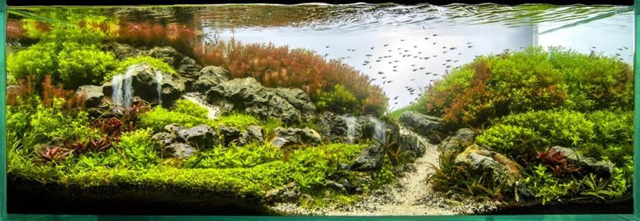 The beauty of aquarium landscapes 21