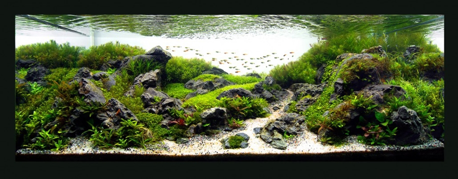 The beauty of aquarium landscapes 22
