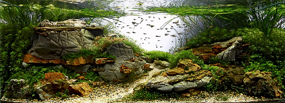 The beauty of aquarium landscapes 23
