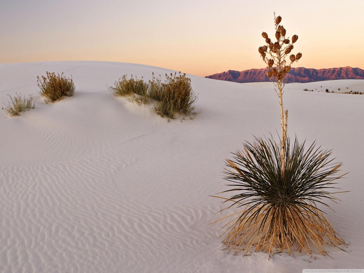 White Sands 06