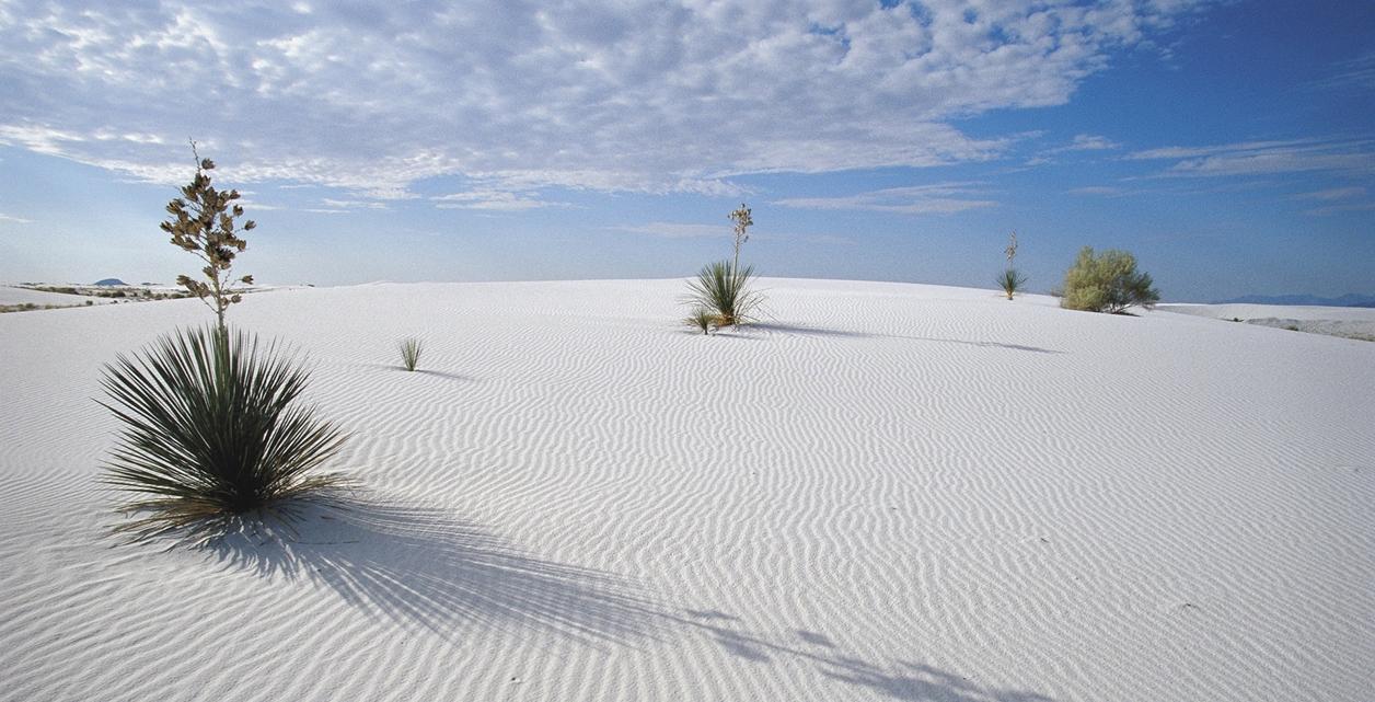White Sands 07