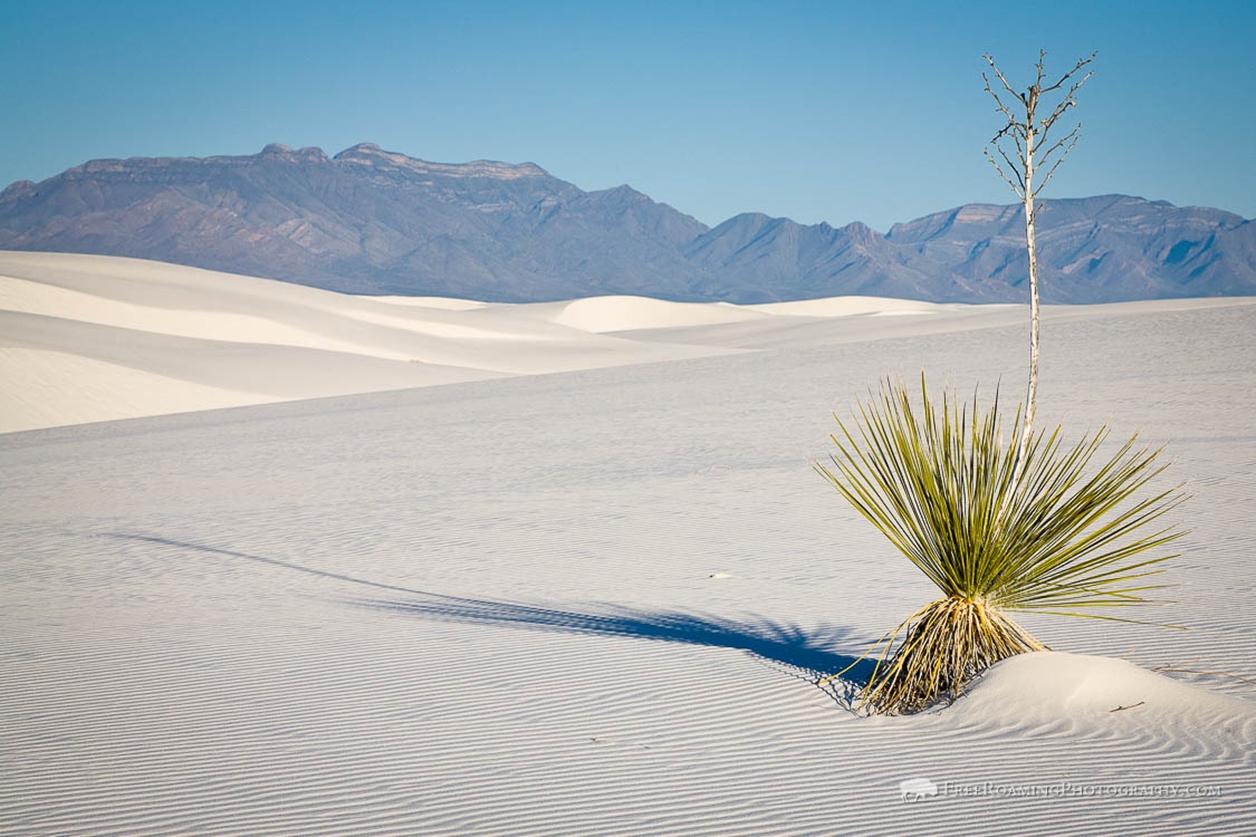 White Sands 25