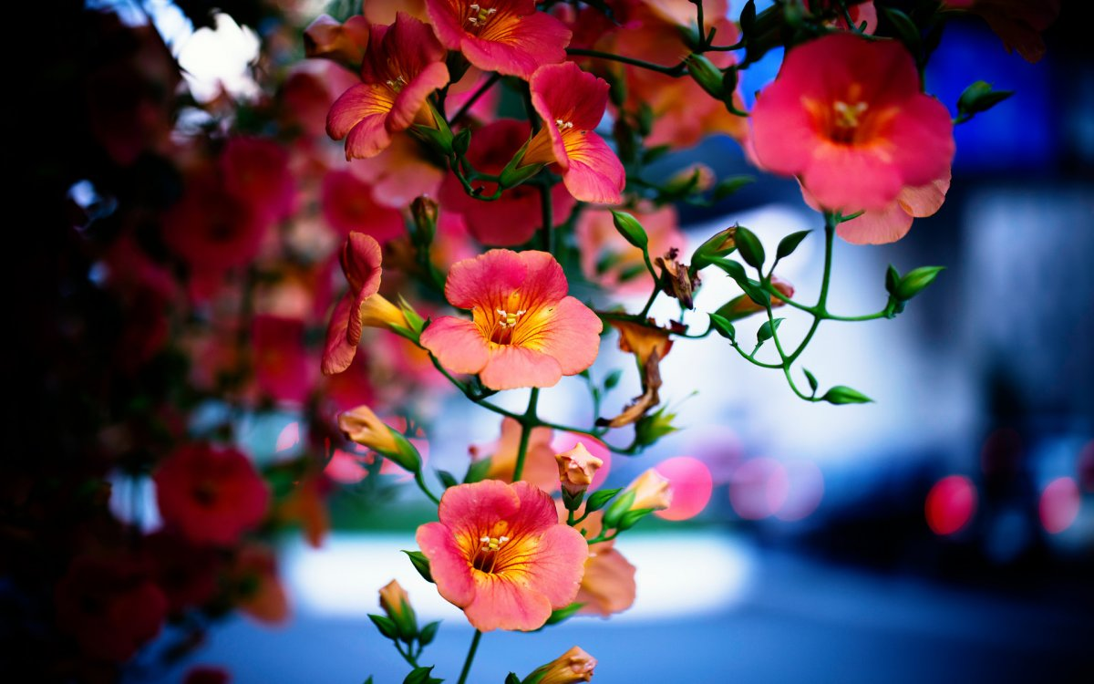 beautiful photo 10